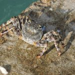 Crab on dock - we fed the fish everyday bits of bread and he showed up to enjoy some too!
