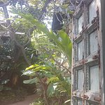 Buri Rasa Village Samui Foto