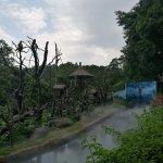 Gibbon enclosure mist
