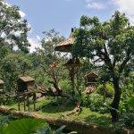Gibbon enclosure