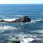 cove with sea lions at Yaquina lighthouse