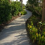 The walking path to the beach - beautiful!