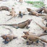 Leguanen reservaat.