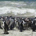 Photo of Stony Point Penguin Colony