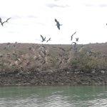 Photo of Isla Espiritu Santo
