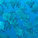 Foto de Utila Dive Center