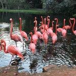 Photo of Sarasota Jungle Gardens