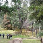 Foto de Osha Trail