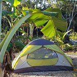 Photo de Quintana Roo National Park Campground & Hiking