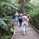 easy accessible walking tracks in the Waipoua Forest