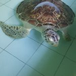 Photo of Turtle Conservation and Education Centre