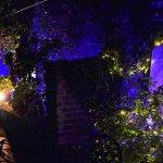 Garden with festive lights