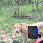 Bild från Jock Safari Lodge