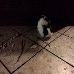 Кролик, обитающий на кухне.