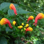 Parrot flowers from the Pipeline Tour