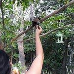 Bosque do Lapao Foto