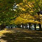 Gingko tree boulevard at the entrance of the park