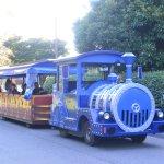 Little train inside the park