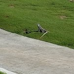 Foto de Iberostar Golf Club Cancun
