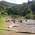 Remains of wharf at old Kauri mill_large.jpg