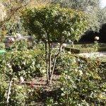 Foto de Jardín el Huerto de Calixto y Melibea