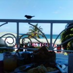 English Breakfast on the balcony(plus visitor)