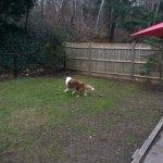 Fenced doggie play yard