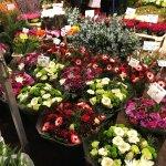 Photo of Flower Market / Bloemenmarkt