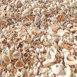 Caspersen Beach Photo