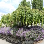 Entrance gardens