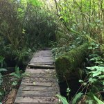 Cedar Wetlands Preserve
