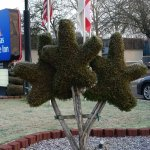 Delightful topiary bushes & happy to see the Cdn flag too.