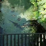 Alligators and turtles, oh my!