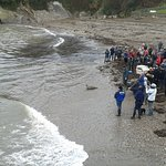 releasing orphan seals back into the sea at Combe Martin