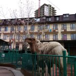 Zoo in Sochi Photo