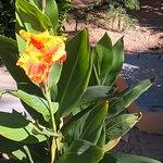 Tolle Pflanze und Farben