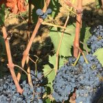 Next years wine, last years was very delicious