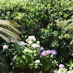 giardino del b&b le ginestre di titina