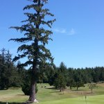 One of several signature tall Firs standing watch over Forest Hills.