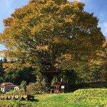 秋のツリーハウス