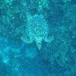 Sea Turtle while snorkling