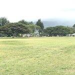 Nice shade trees behind Turtle beach