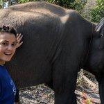 Chiang Mai Elephant Sanctuary Photo