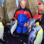 Snow Penguins at Ski Dubaiの写真