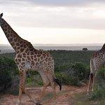 Foto de Kariega Game Reserve - River Lodge