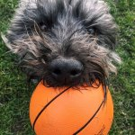 Edward with his ball ( just because i like this pic )