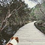 Merimbula Boardwalk