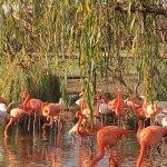 Flamingos - 2 kinds.