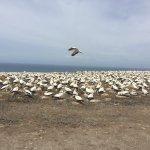 Gannet Beach Adventures Photo