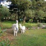 Hacienda Cusin-billede